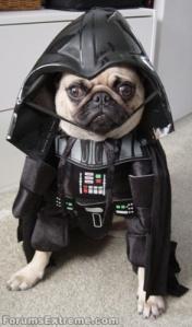 Funny_Pictures_Star-Wars_Vader's_Dog